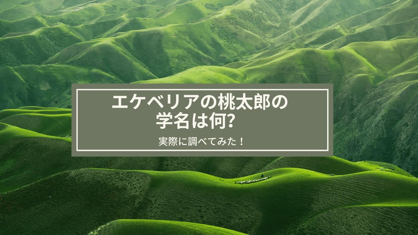 エケベリア,桃太郎,学名,多肉植物